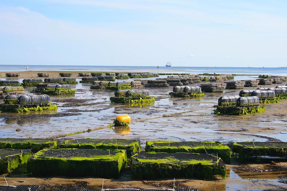 Subvenciones ayudas acuicultura galicia pontevedra vigo asesoría abogados